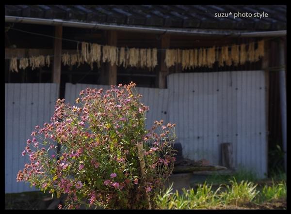 hosi-daikon_org.jpg