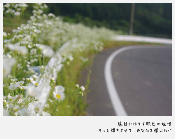 imgp1290-6.jpg