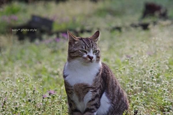 m_hanabatakeno-tibita.jpg