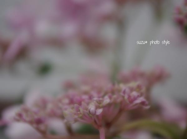 pink-tubomi.JPG