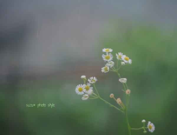 IMGP3632-6.jpg