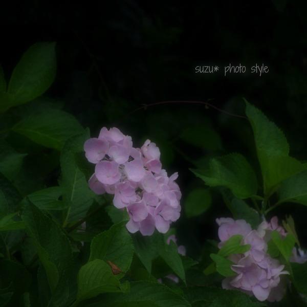 IMGP3633-6.jpg