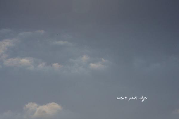 IMGP9761-6.jpg